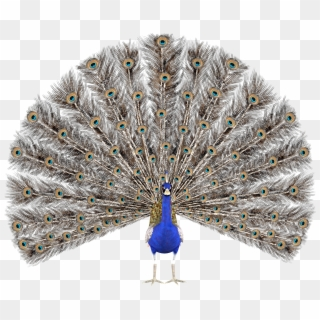 103 1030527 peacock png images peacock hd no background transparent