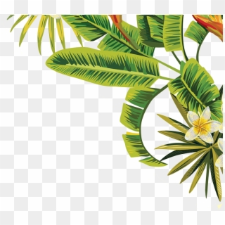 Palm Leaves Png Transparent For Free Download Pngfind The free borders may be used for personal, educational, and charitable purposes. palm leaves png transparent for free