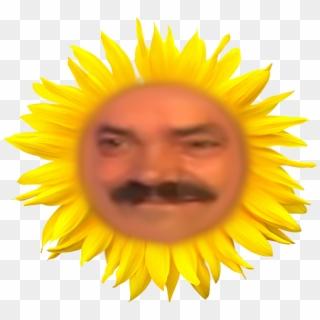 Bunga Matahari Vektor Hd Png Download 800x600 1607199 Pngfind