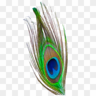 170 1706946 profile picture for this group peacock feather png