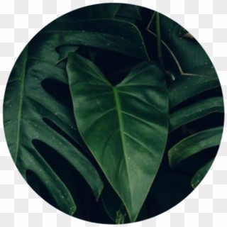 Greenaesthetic Green Greenaesthetics Aesthetic Tumblr Dark Green Leaf Aesthetic Hd Png Download 1024x1024 2115932 Pngfind