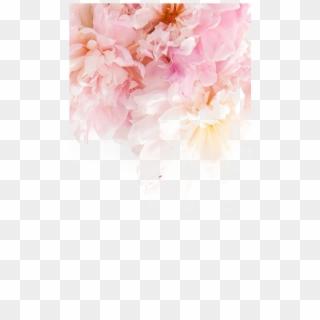 226 2268229 peonies wallpaper iphone bts jin wallpaper phone hd
