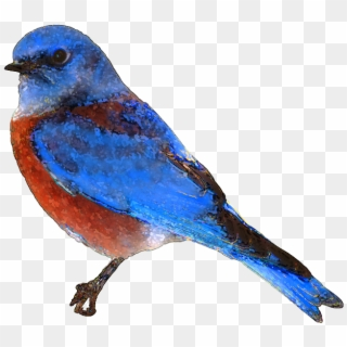 Free Flying Birds Clipart Download Free Clip Art Bluebird Transparent Hd Png Download 782x698 2329697 Pngfind