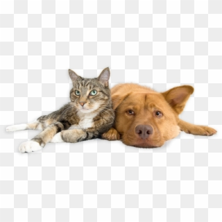 Download Our App Dog And Cat Transparent Background Hd Png Download 1801x771 2401894 Pngfind