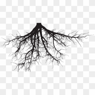 Tree Roots Png Transparent For Free Download Pngfind