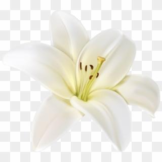 White Flower PNG Trans...