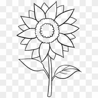 How To Draw A Sunflower Easy Step Step Drawing Guides Black And White Line Art Sunflower Hd Png Download 678x600 3166116 Pngfind
