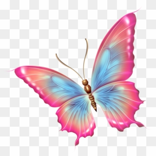 Butterfly Png Transparent For Free Download Pngfind