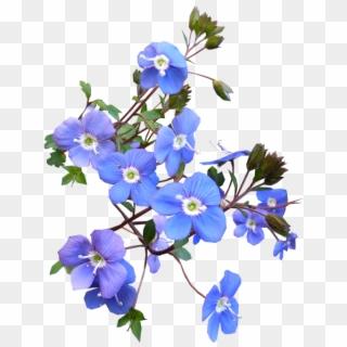Blue Flower Png Transparent For Free Download Pngfind