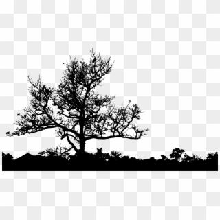 Pine Tree Silhouette Png Transparent For Free Download Pngfind