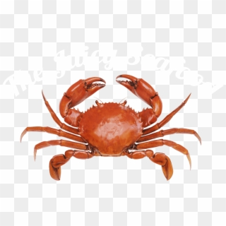 Crab PNG Transparent For Free Download - PngFind
