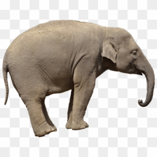 Elephant Png Transparent For Free Download Page 2 Pngfind All elephant png images are displayed below available in 100% png transparent white background for free download. elephant png transparent for free