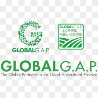 Certificazioni Global Gap Logo Global Gap Certificate Logo Hd Png Download 1980x1167 6591514 Pngfind