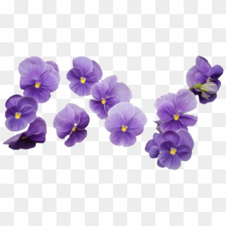 Flower Png Transparent For Free Download Pngfind