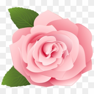 Pink Rose Png Transparent For Free Download Pngfind