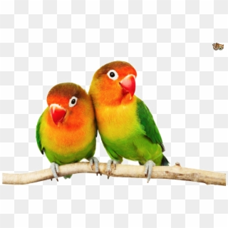 Birds Hd PNG Transparent For Free Download - PngFind